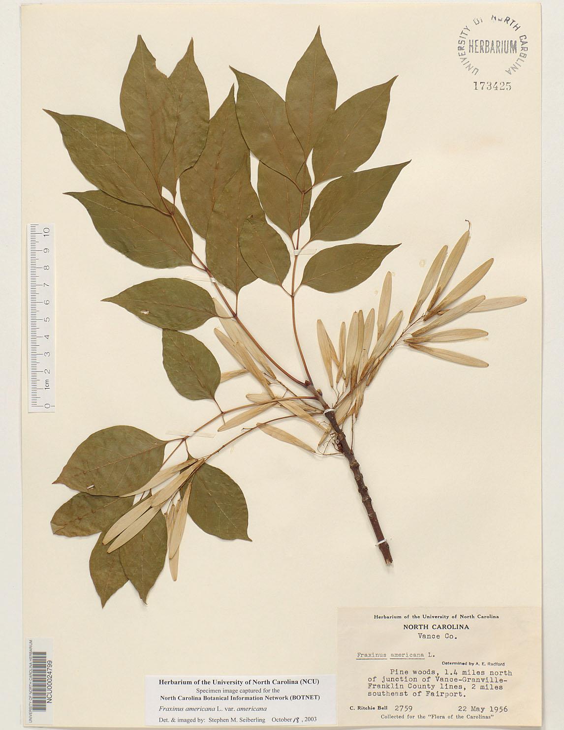 Plant Information Center Fraxinus Americana Var Americana