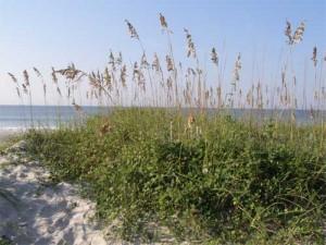 Beach-dune