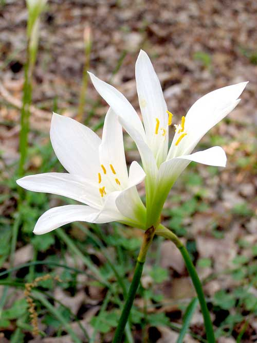 lilymeadows