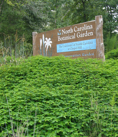 Nature planted the beautiful dwarf partridge pea ground cover for the botanical garden entrance sign.  PHOTO BY KEN MOORE