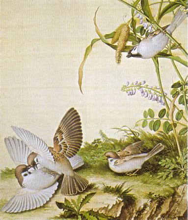 Album of Flower Paintings, Leaf 12, Lang Shining (Giuseppe Castiglione, S.J.) (1688-1766)