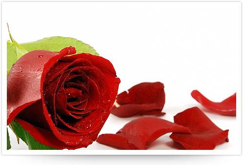 http://www.ibiblio.org/hhalpin/homepage/presentations/tpac2008/roses.jpg