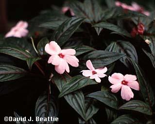 Plantas para lugares secos y sombr os for Plantas ornamentales y sus cuidados