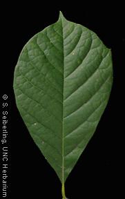 Plant Information Center Nyssa Sylvatica