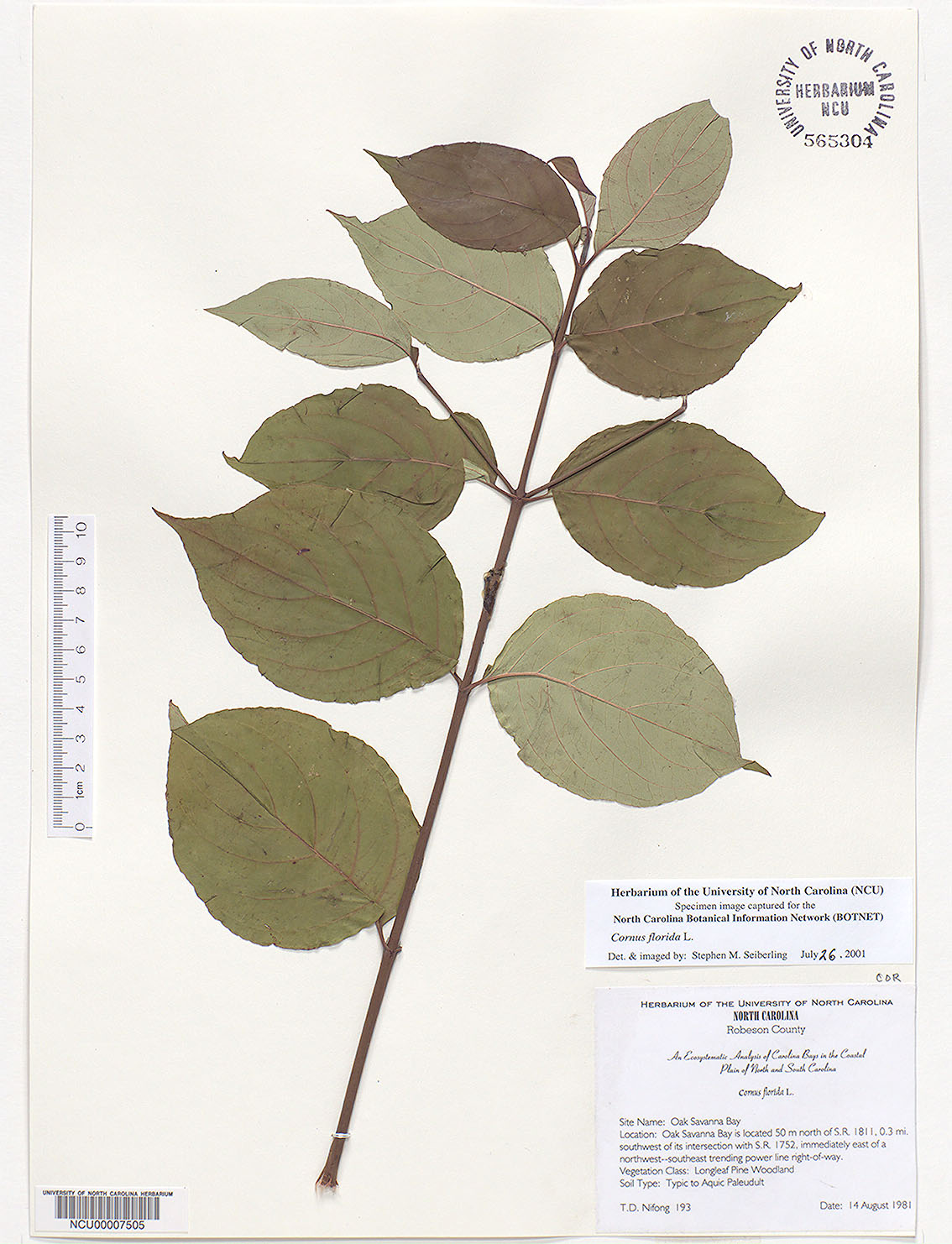 Common Trees Of The North Carolina Piedmont Cornus Florida L