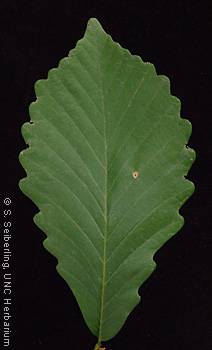 Common Trees Of The North Carolina Piedmont Quercus