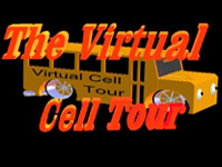Image result for the virtual cell tour