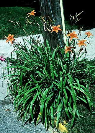 Plantas Para Lugares Secos Y Sombrios
