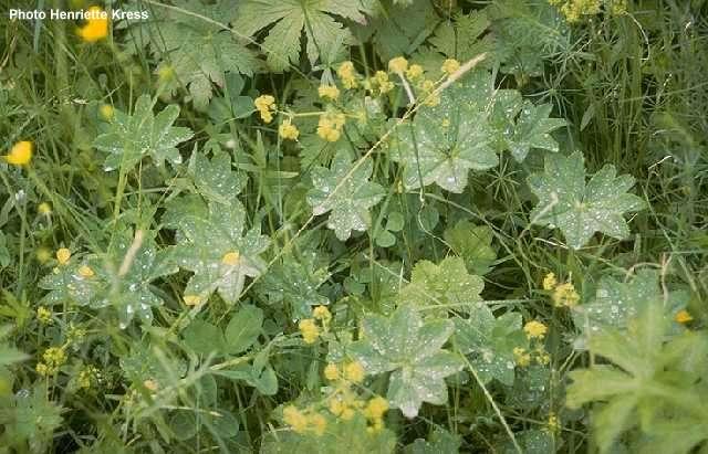 Plantas para lugares secos y sombr os for Arbustos decorativos