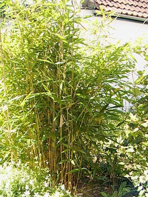 Plantas para lugares secos y sombr os for Arboles y plantas para jardin