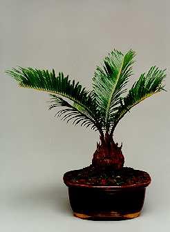 Plantas para lugares secos y sombr os for Plantas de exterior que no necesitan sol