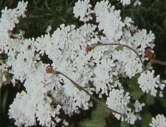 Plantas para lugares secos y sombr os for Plantas de invierno para exterior