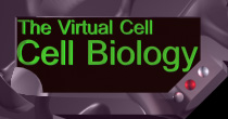 The Virtual Cell